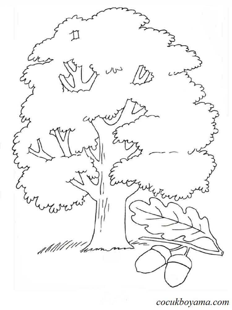 Напечатать раскраски деревьев